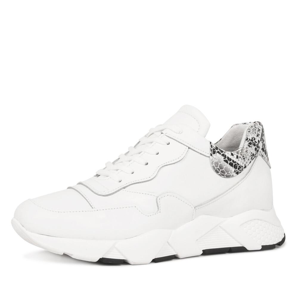 Roberto D'Angelo solar sneaker